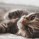 Tela de Proteção para Gatos
